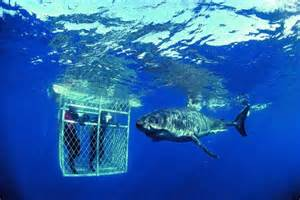 It's all good... as long as the shark is on the right side of the cage.